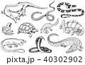 両生類 動物 ベクタのイラスト 40302902