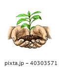 双葉 芽生え 新芽のイラスト 40303571