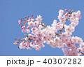 桜の花 40307282