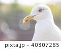 カモメ 40307285