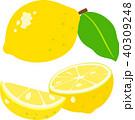 レモン 断面 実のイラスト 40309248