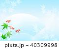 青紅葉 金魚 夏のイラスト 40309998
