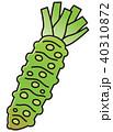 わさび 山葵 根菜のイラスト 40310872
