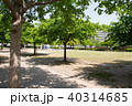 公園 新緑 初夏の写真 40314685