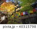 永観堂 秋 紅葉の写真 40315798