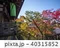 永観堂 秋 紅葉の写真 40315852