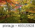 永観堂 秋 紅葉の写真 40315928