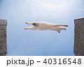ネコジャンプ 40316548