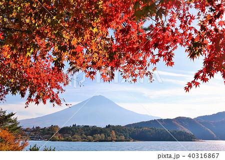富士山と秋の紅葉 40316867
