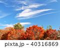 青空 秋晴れ 紅葉の写真 40316869