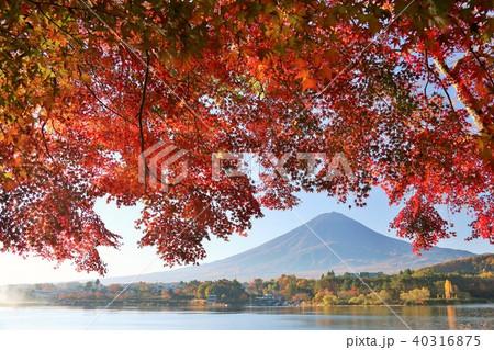 富士山と秋の紅葉 40316875
