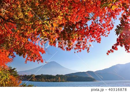 秋の富士山と紅葉 40316878