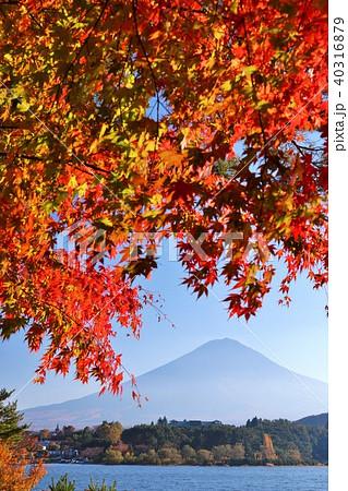 秋の富士山と紅葉 40316879