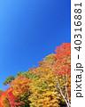 青空 秋 紅葉の写真 40316881