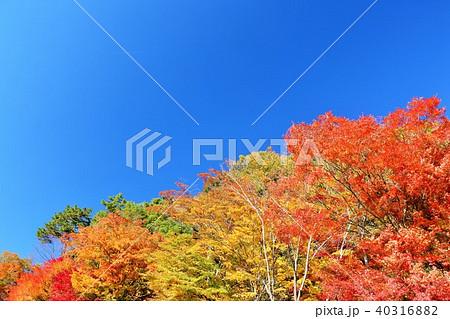 秋の青空と紅葉 40316882