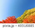 青空 秋晴れ 紅葉の写真 40316885