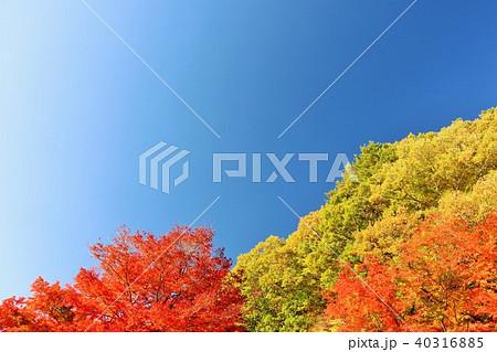 秋晴れの青空と美しい紅葉 40316885