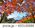 富士山 山 秋の写真 40316886