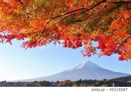 富士山と紅葉 40316887