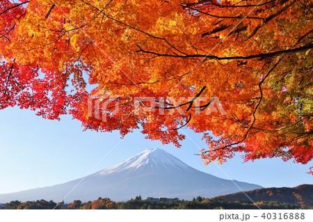 富士山と紅葉 40316888