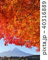 富士山 山 紅葉の写真 40316889