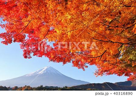 富士山と紅葉 40316890