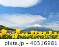 富士山 青空 チューリップの写真 40316981
