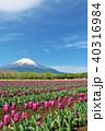 富士山 青空 チューリップの写真 40316984