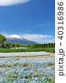富士山 青空 花畑の写真 40316986