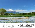 富士山 青空 花畑の写真 40316987