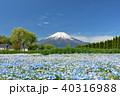 富士山 青空 ネモフィラの写真 40316988