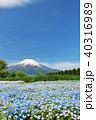 富士山 青空 ネモフィラの写真 40316989