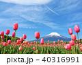 富士山 山 花の写真 40316991