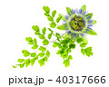 ホワイト 花 フラワーの写真 40317666