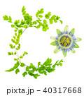 花 フラワー 情熱の写真 40317668