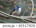 薬師池公園の野鳥 40317926