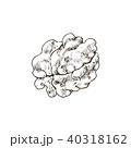 ベクトル くるみ 胡桃のイラスト 40318162