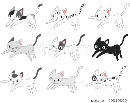 色んな猫.2 40319390