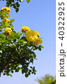 青空 バラ 黄色の写真 40322925