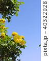 青空 バラ 黄色の写真 40322928