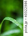 水玉 水滴 葉の写真 40322986