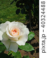 花 バラ 薔薇の写真 40324488