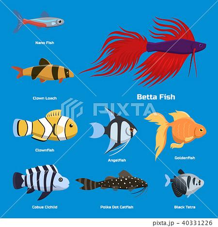 Exotic tropical aquarium fish different colors underwater ocean species aquatic nature flat vector 40331226