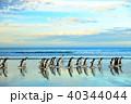 ペンギンマーチ 40344044