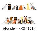 犬と猫のボーダーセット 40348134