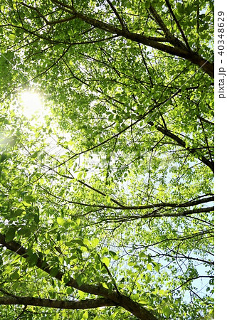 初夏の新緑 40348629