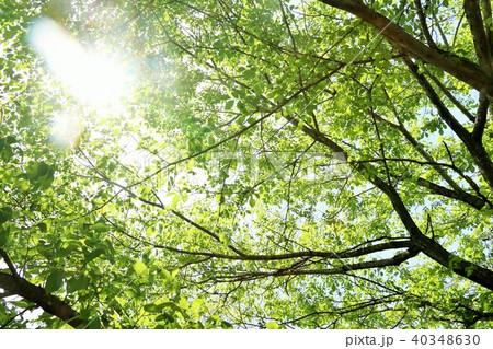 初夏の新緑 40348630