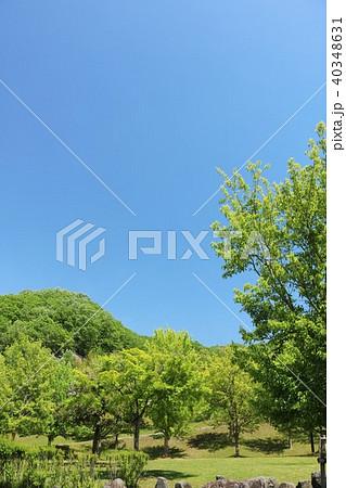 初夏の青空と新緑の公園 40348631