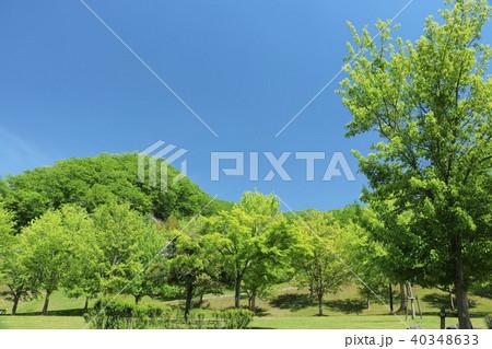 初夏の青空と新緑の公園 40348633