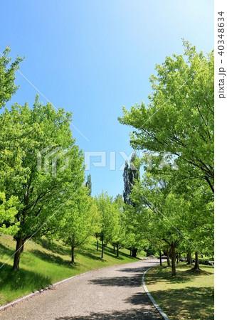 初夏の青空と新緑の公園 40348634